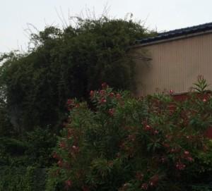 植物に覆われた家