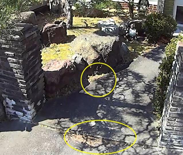 家の入口の草やゴミは要注意
