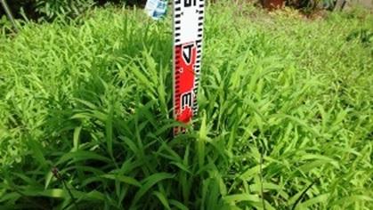 雑草の計測