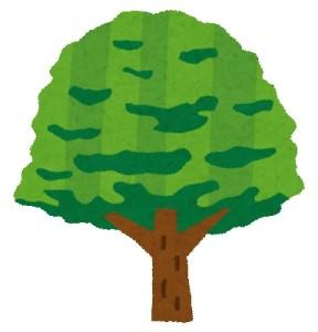 木 イメージ